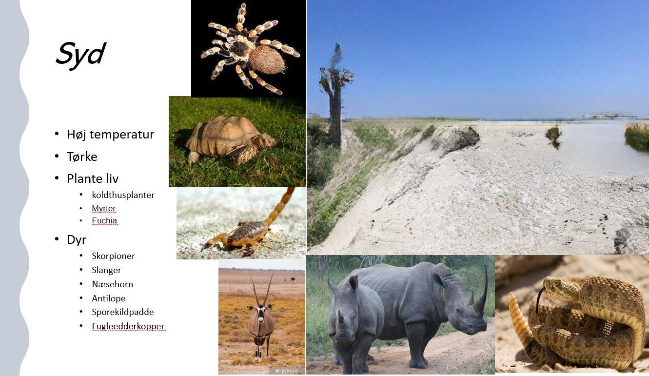 Skærmbillede fra en elevpræsentation, hvor eleven med tekst og billeder beskriver et habitat og dets dyreliv. Der billede af habitatet og edderkop, skildpadde, skorpion, næsehorn, gnu og slange